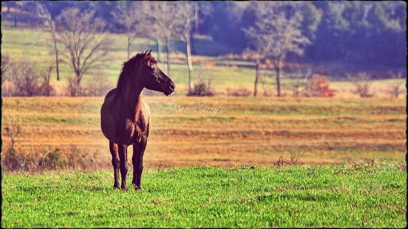 horsewm